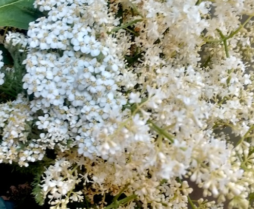 Yarrow and Elder Flowers