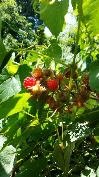 wineberries 18